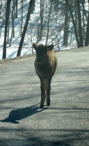 Where the Wild Life Are: Lone Elk Park