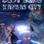Roadtrip KC: Sea Life Aquarium