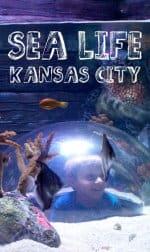 Roadtrip KC: Sea Life Aquarium