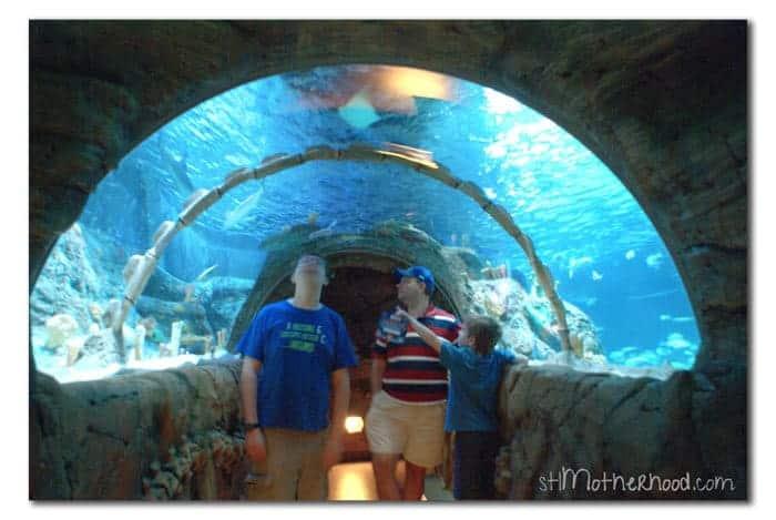 Roadtrip Kc Sea Life Aquarium