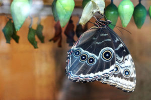 Gateway to Fun: The Butterfly House