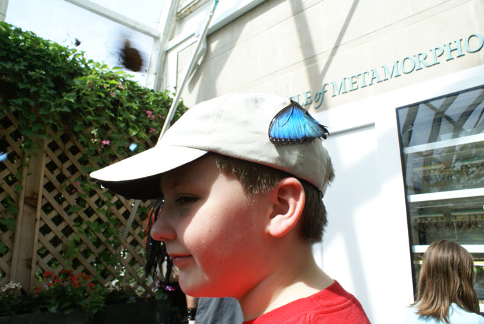 butterfly house butterfly on hat