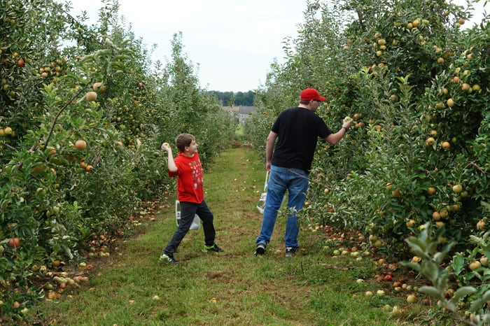 Brothers in orchard, smaller boy poised to throw apple at his big brother.