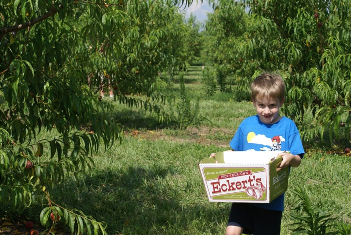 boy in blue shirt holds a box with Eckert's logo in a peach orchard