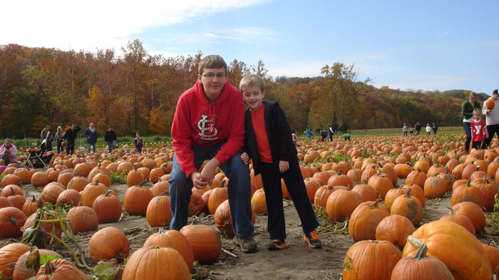st. louis pumpkin patches