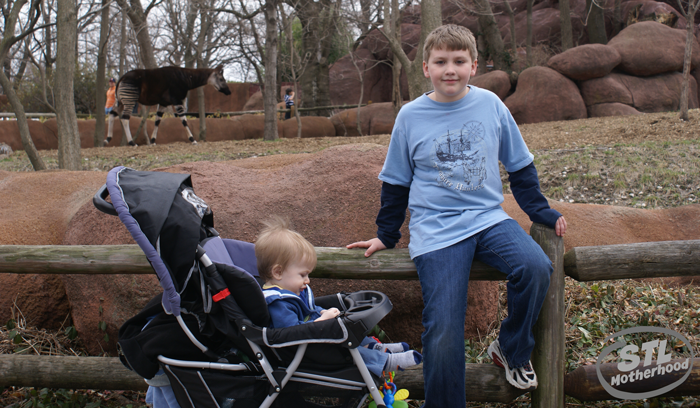 two brothers at St. Louis Zoo, one is baby in stroller other is 9