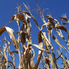 Get Lost in this Wicked Corn Maze (giveaway)