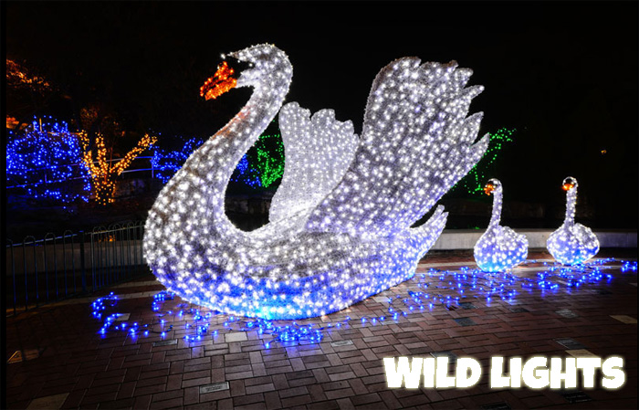 wild lights at the saint louis zoo - Christmas Lights At The Zoo