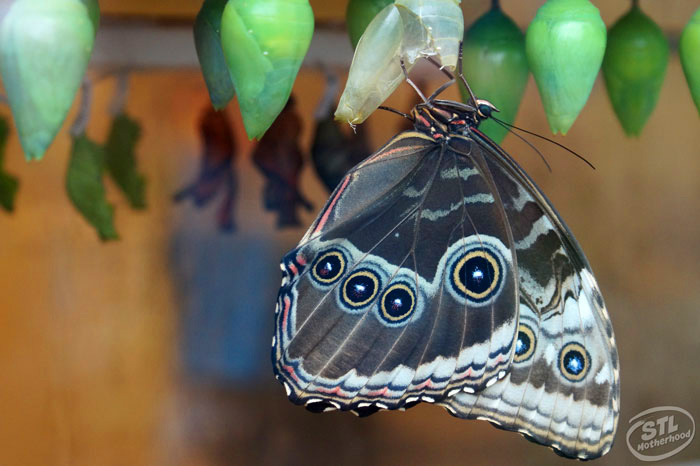 butterfly house adopt a butterfly fly