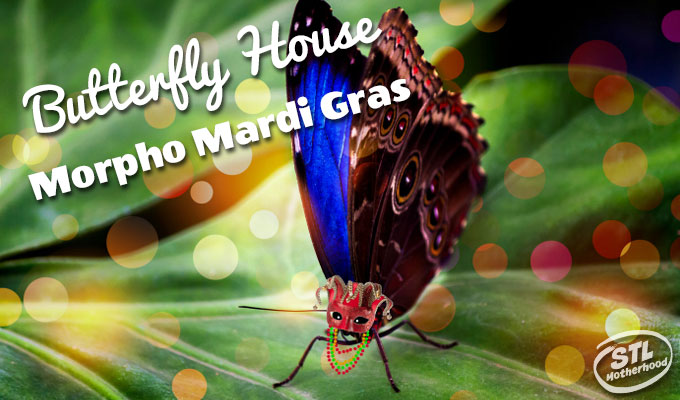 morpho mardi gras butterfly house