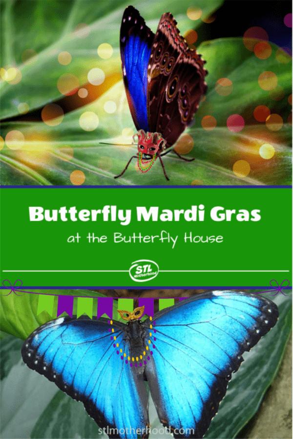 mardi gras butterfly
