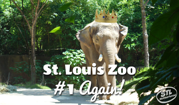 st. louis zoo best