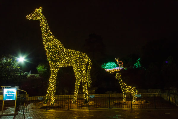U.S. Bank Wild Lights_Giraffe_Roger Brandt Saint Louis Zoo_web