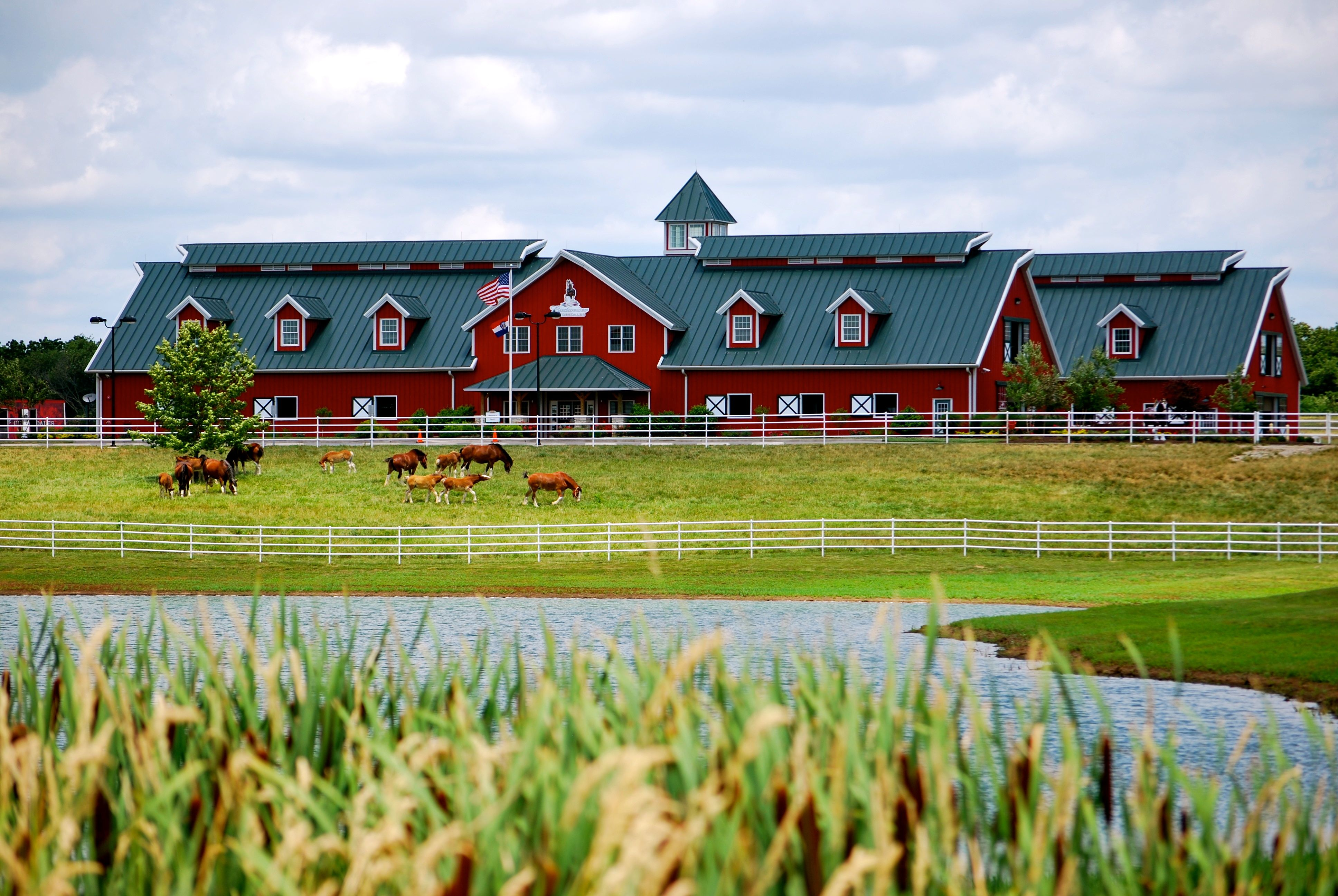 Budweiser Clydesdales barn at Warm Spring