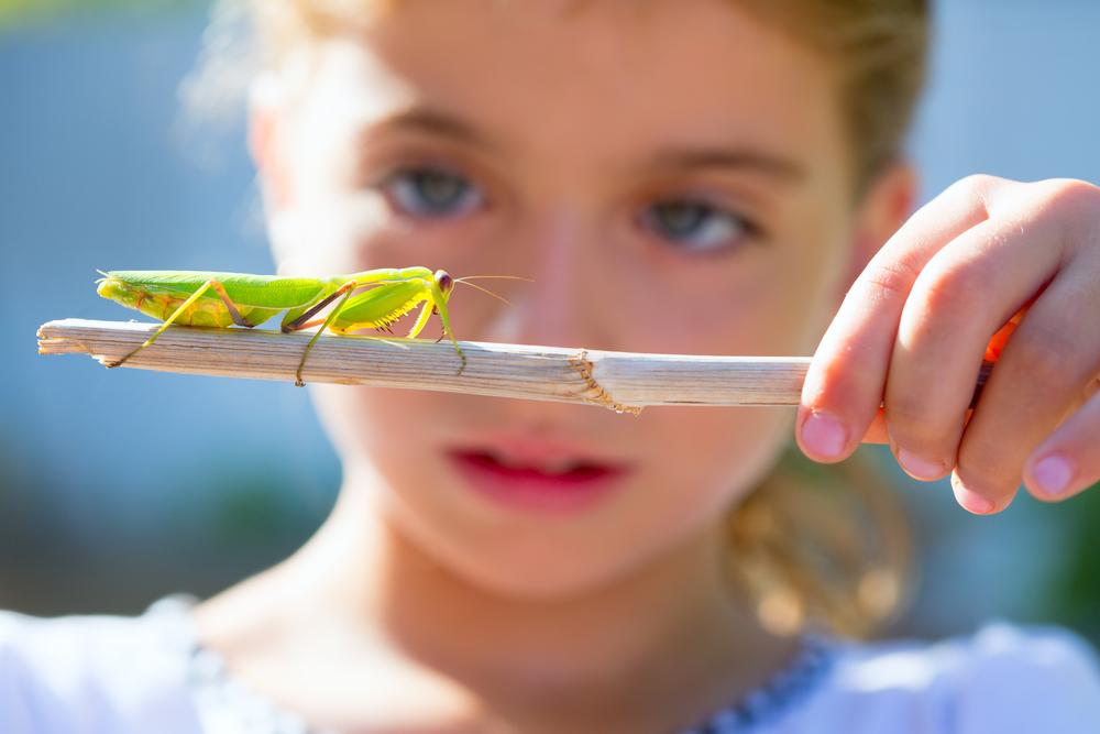 naturalist biologist kid girl looking praying mantis