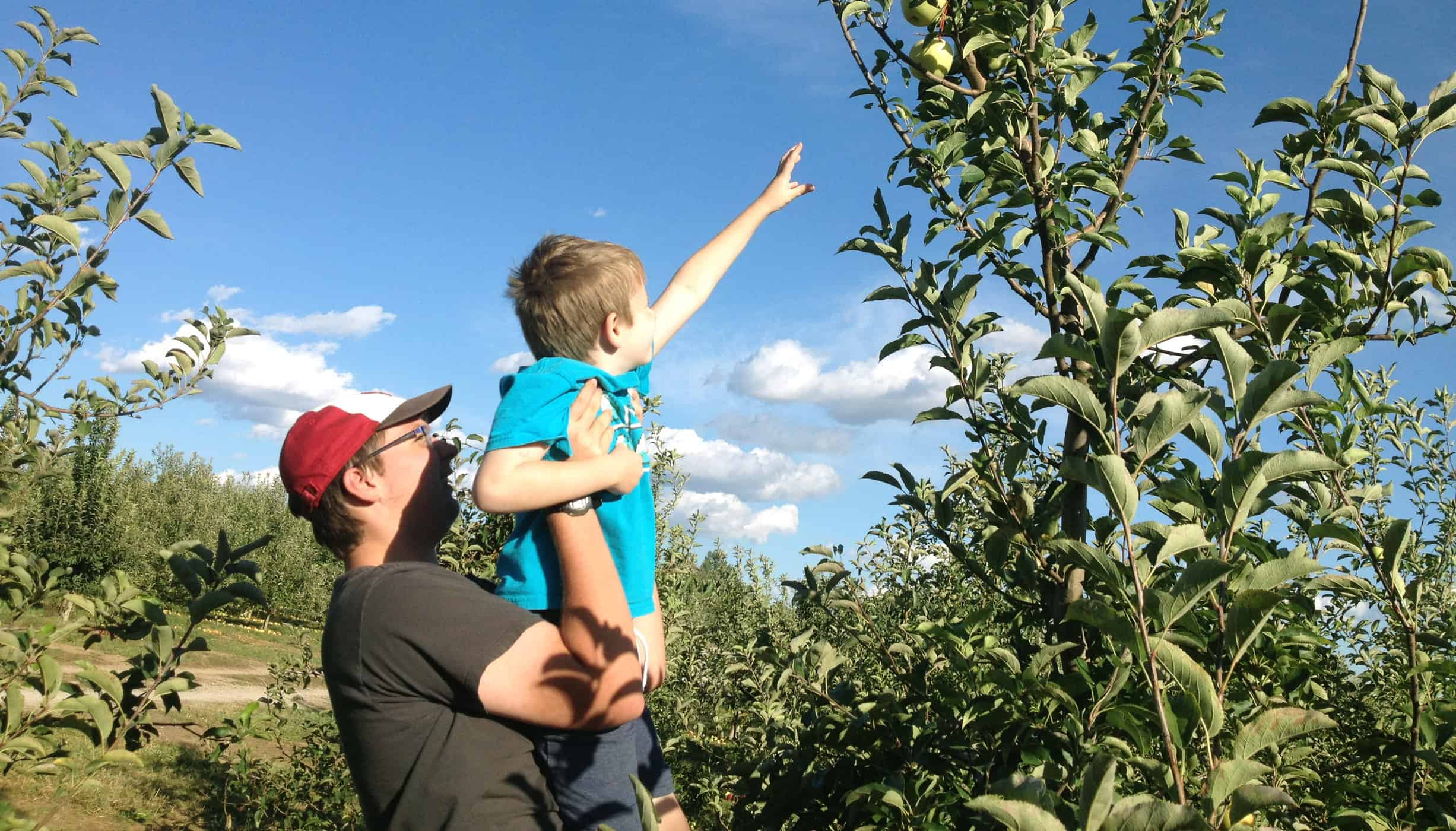 Brother's picking apples at Eckert's Farm: teen holds little brother up to reach fruit on tall branch.