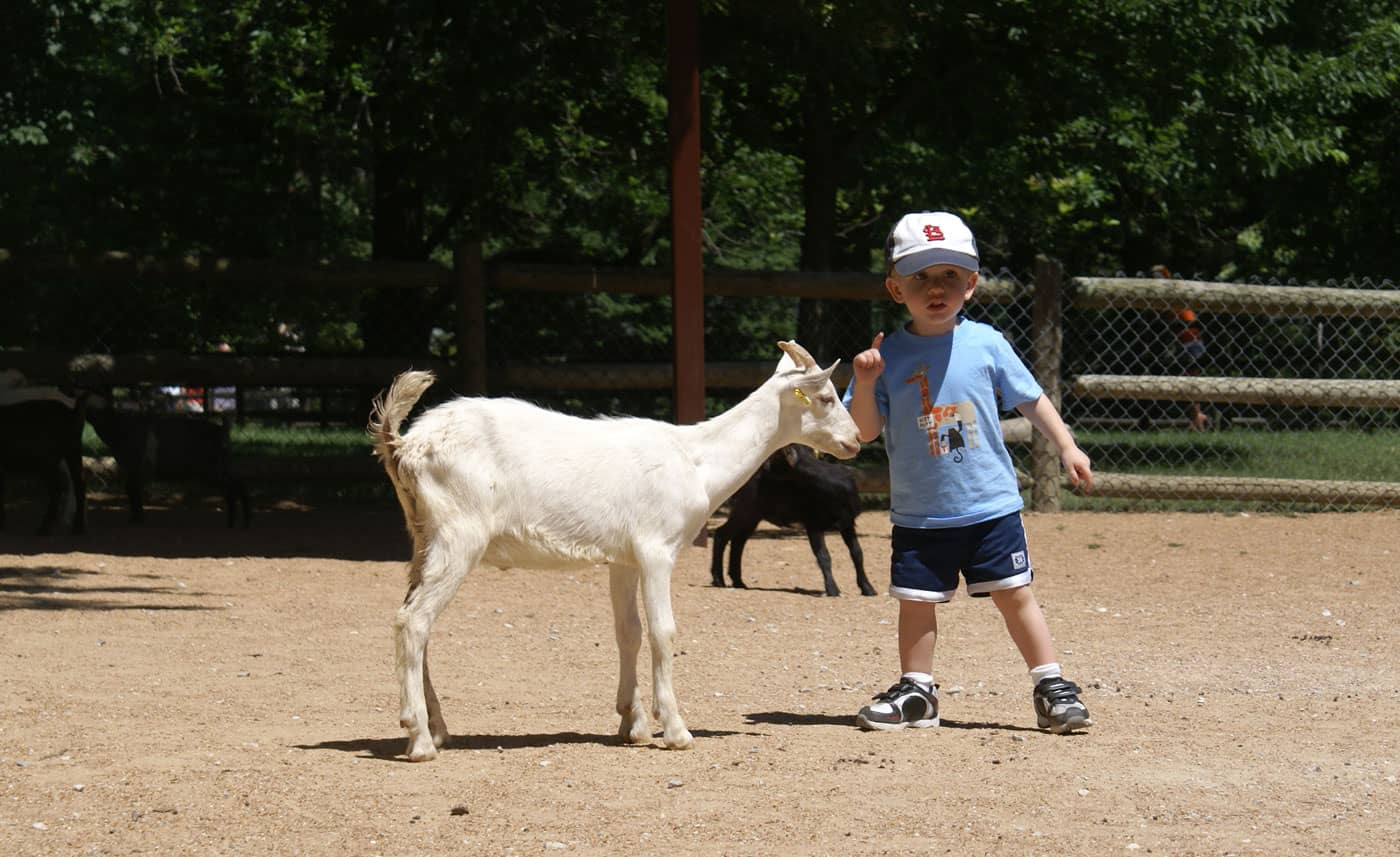 Small boy petting goat