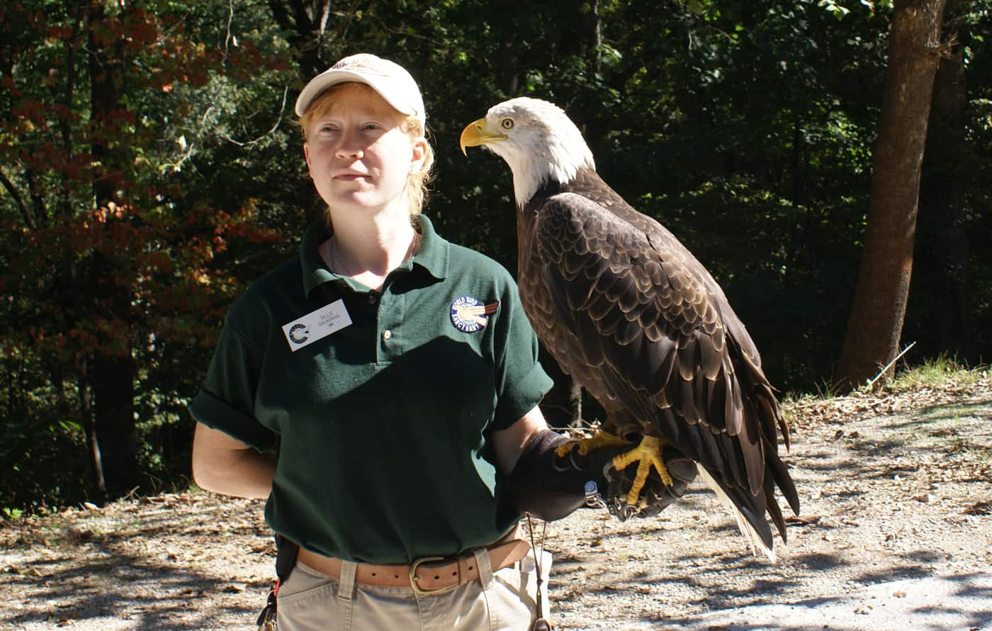 Eagle and handler at World Bird Sanctuary
