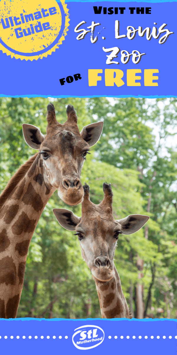 Ultimate guide to visiting the fantastic St. Louis Zoo for %100 free. #ZOO