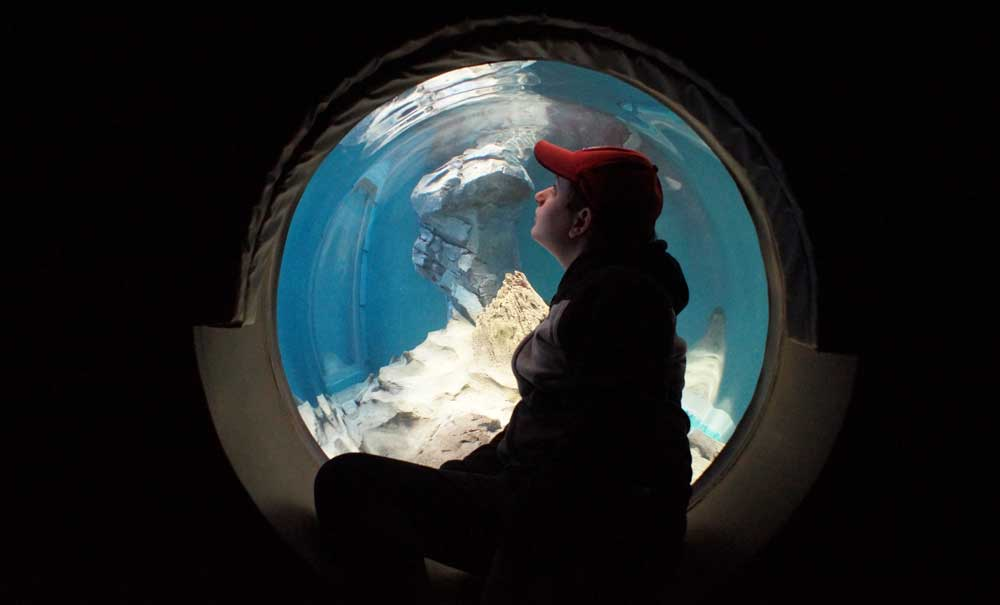 Boy in red hat sitting in a bubble window looking at the otters