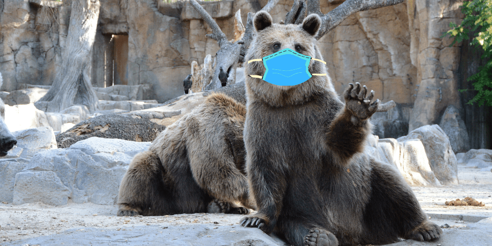 bear wearing a face mask