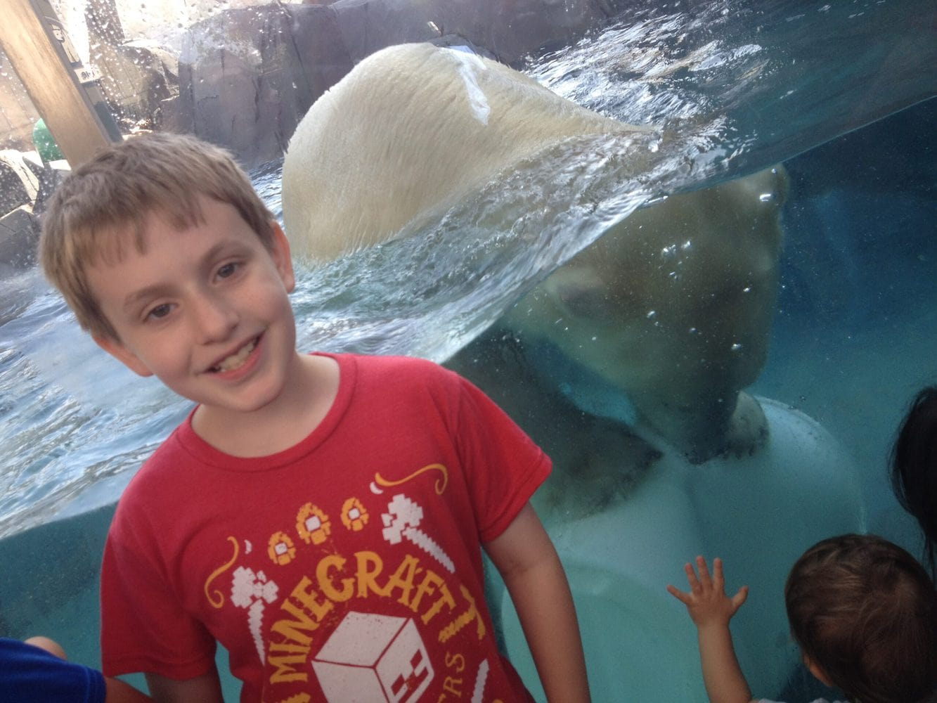 kid in front of the polar bear at the St. Louis Zoo