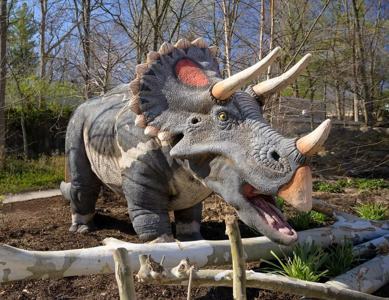 triceratops model at the St. Louis Zoo