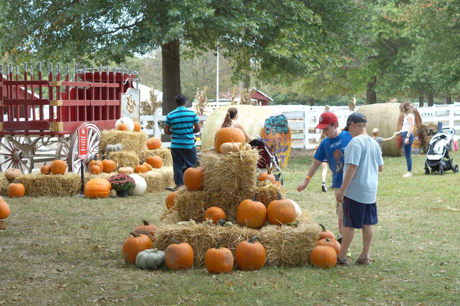 Fall Fest pumpkin patch at Grant's Farm